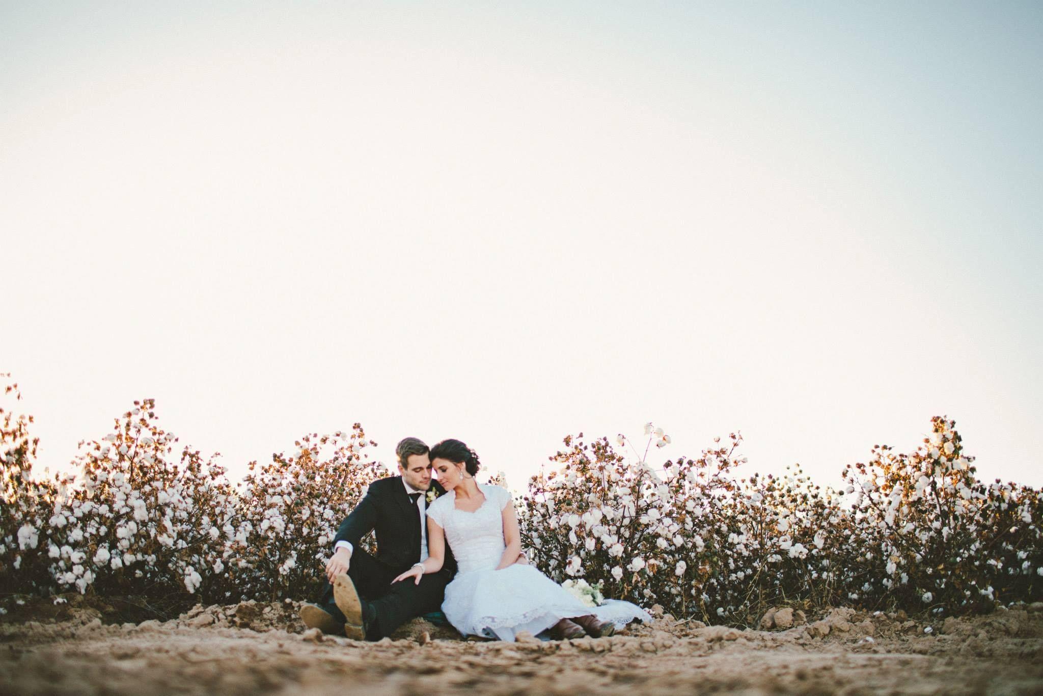 cotton fields - AZ - photo by @Camille Blais Blais Blais Dawn Parker