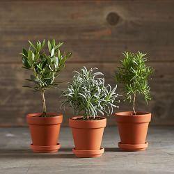 Topiary Trees, Topiaries & Small Topiaries | Williams-Sonoma