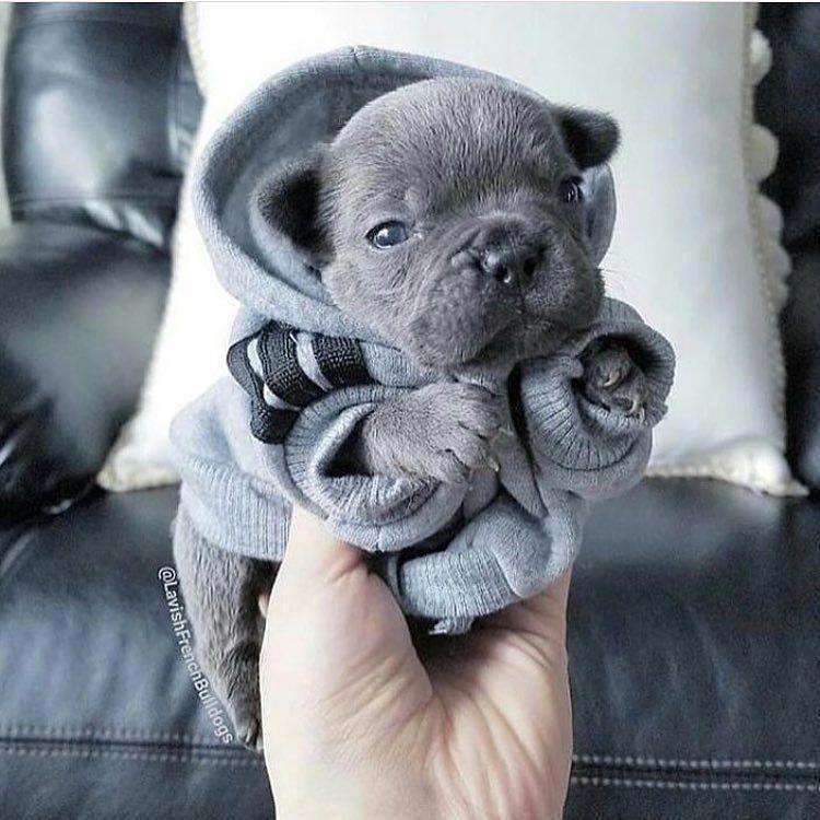 Cute Animals New Zealand Pitbullpuppiesnewzealand Cute Baby