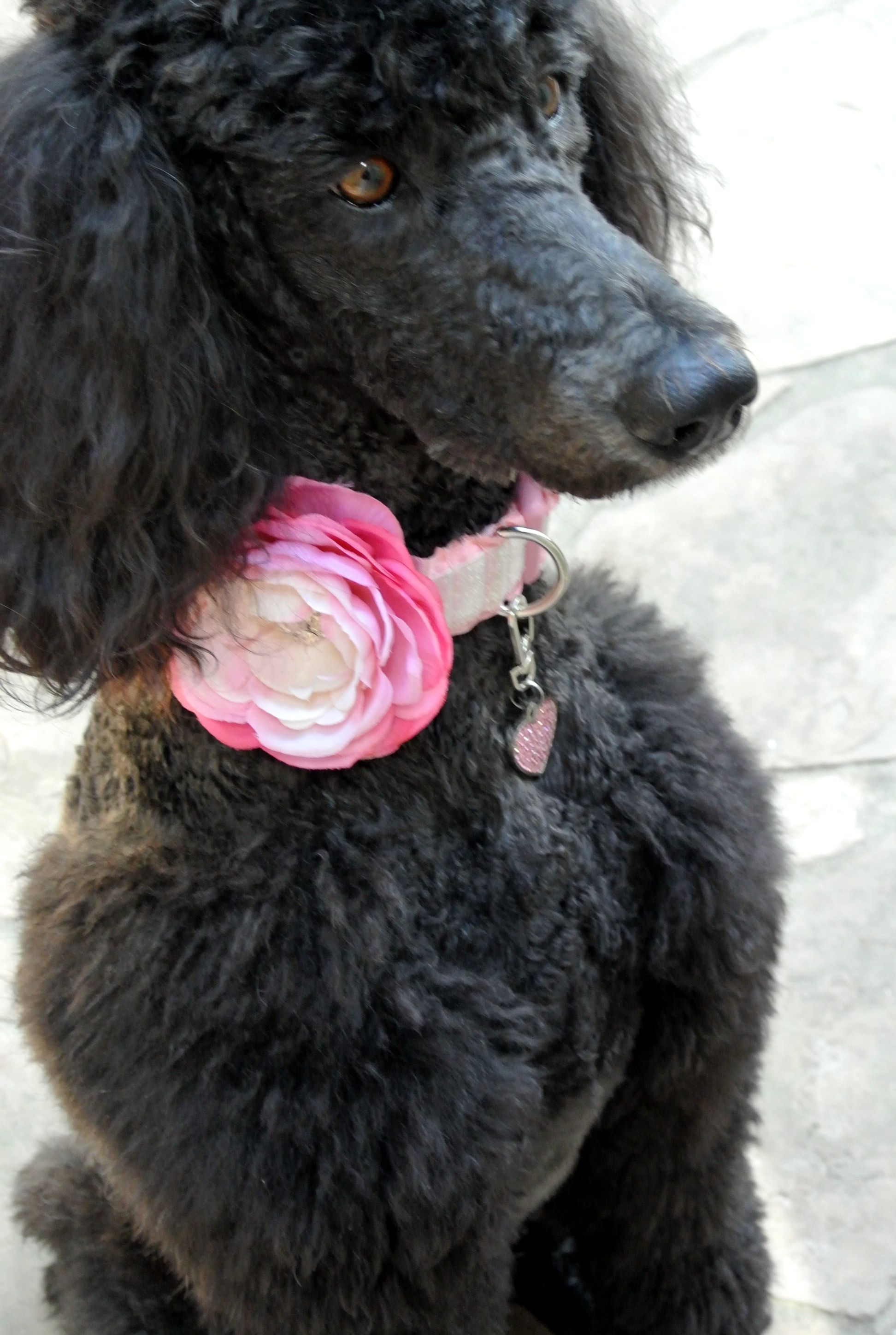Darla Ready For Spring New Light Pink Ombre Flower Ruffle