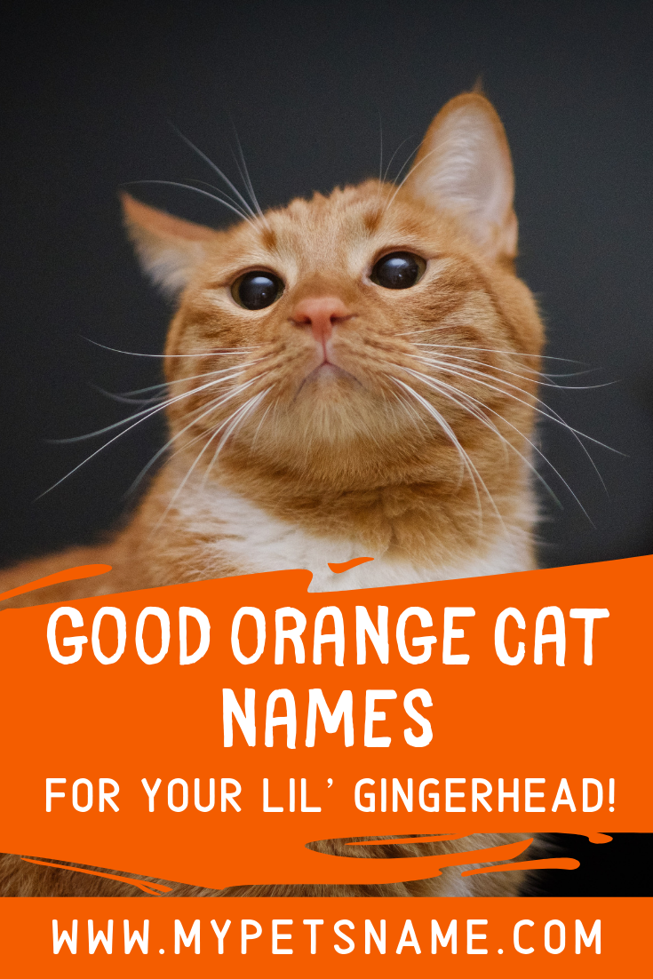 A nice way to think of good orange cat names is to think