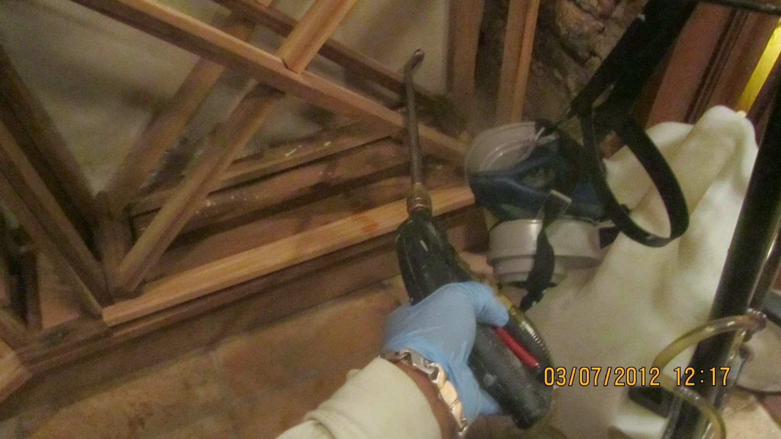 NYC Mold Inspection Services Mold Remediation Services in