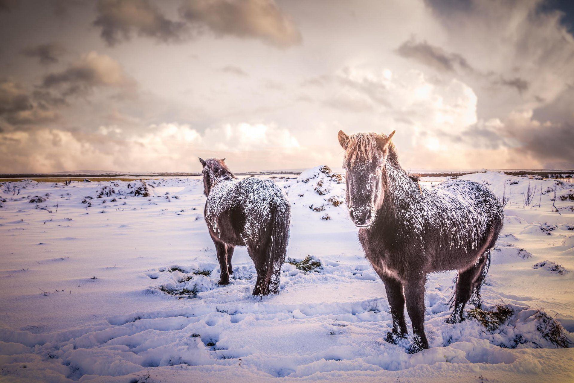 Simple Wallpaper Horse Winter - 843e3de34a97664e8d5d15922d269052  Pictures_93628.jpg