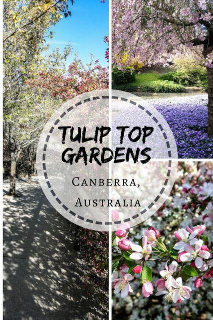 Gorgeous Cherry Blossoms At Tulip Top Gardens Australia Oceania Travel Melbourne Travel New Zealand Travel