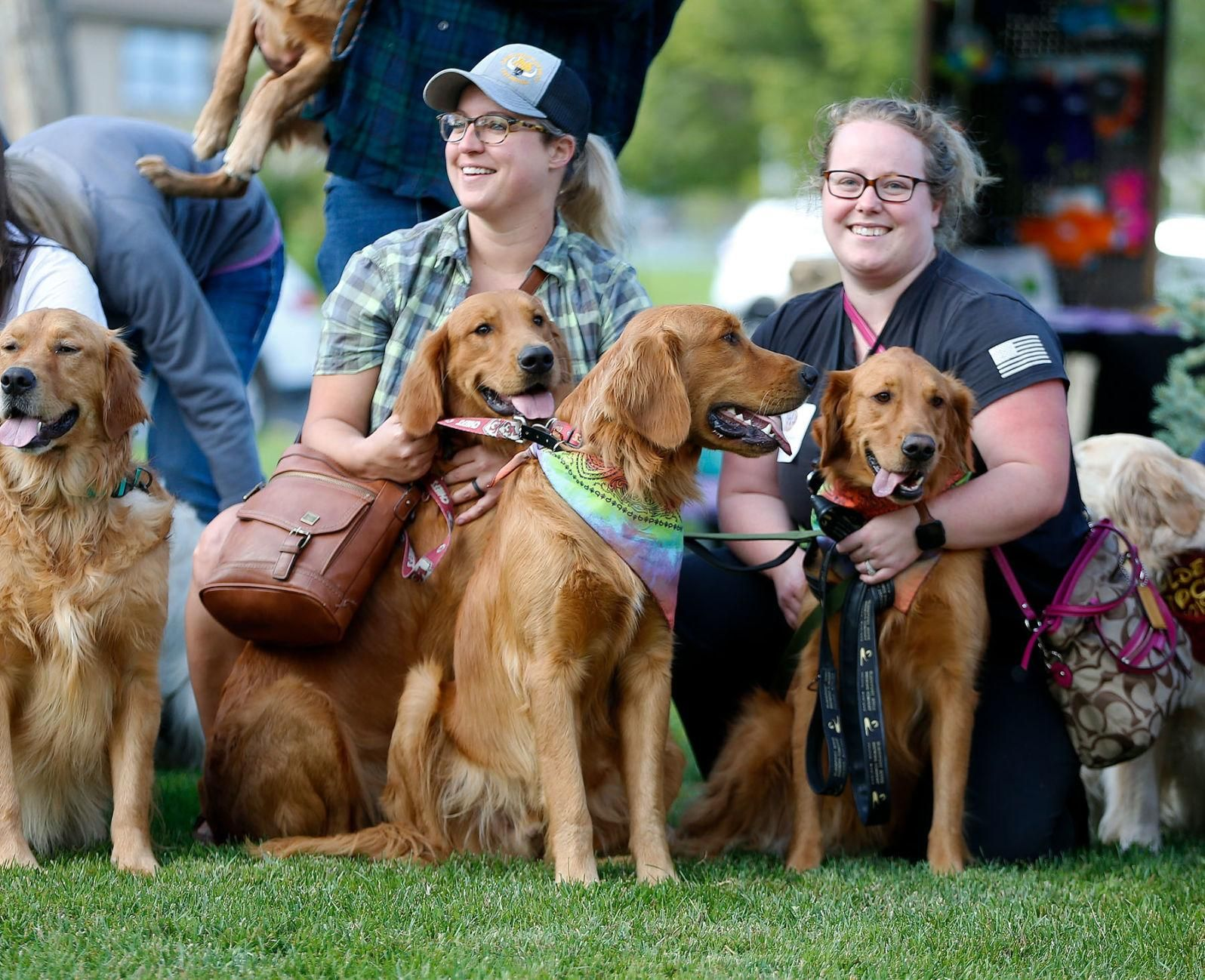 Goldenstock 2019 Dozens Of Golden Retrievers And Their Owners