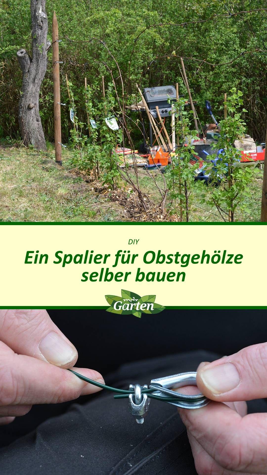 Diy Spalier Bauen Spalier Obstgeholze Mdr Garten