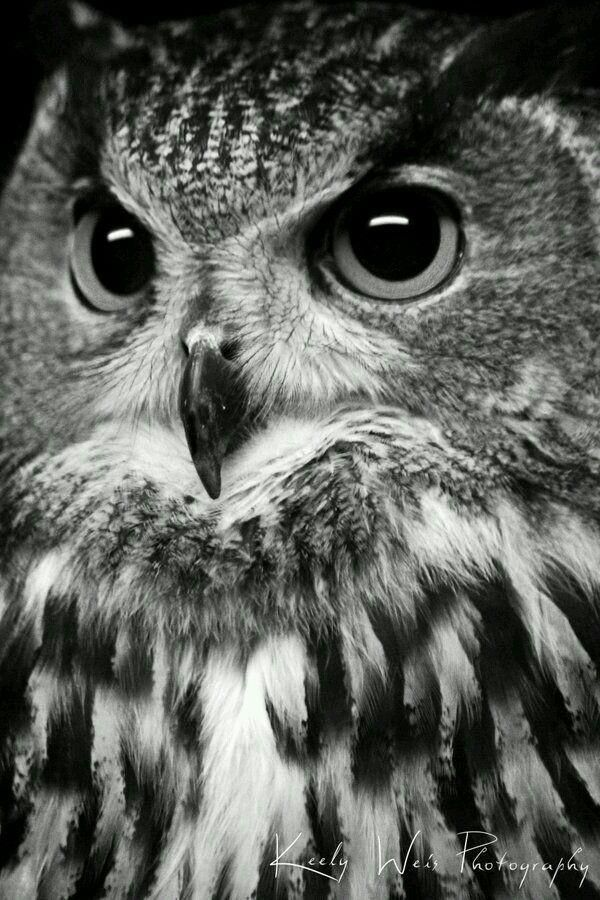 Zwart wit foto's van ons kwartet