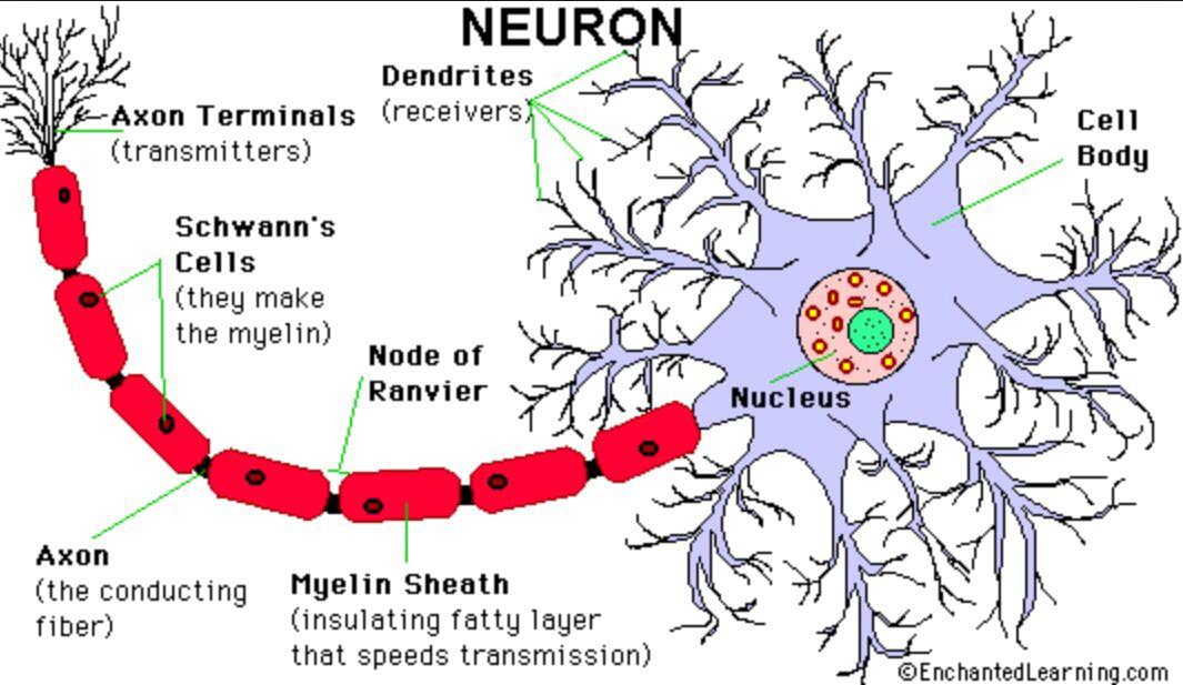 Neuron | Mind maps in nature | Pinterest