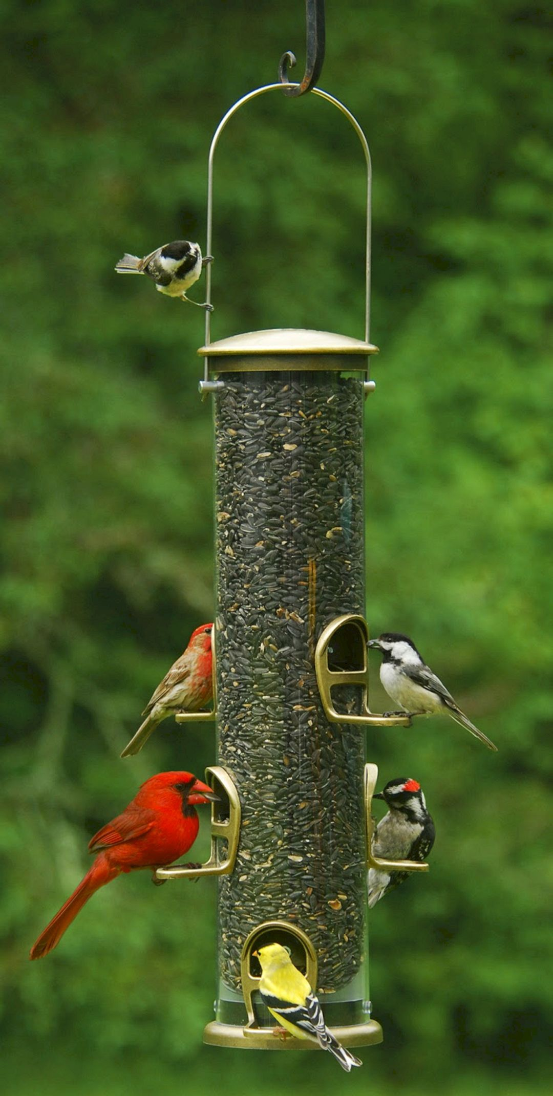 40 awesome bird feeders ideas that will fill your