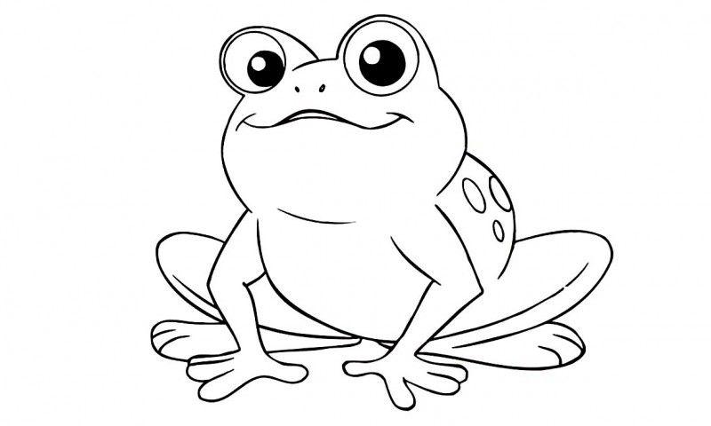 Los Mejores Dibujos De Sapos Para Colorear Descubre Nuestros Dibujos De Sapos P Ranas Para Dibujar Paginas Para Colorear De Animales Paginas Para Colorear
