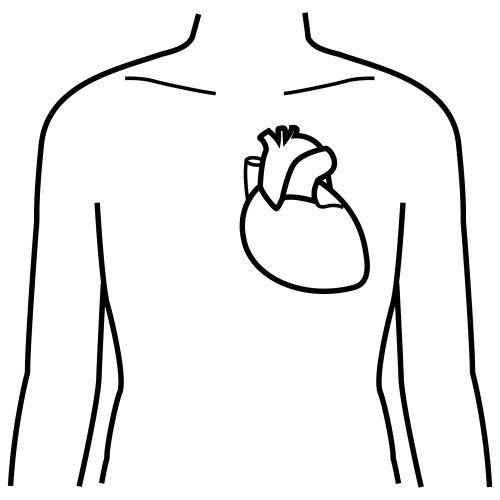 Okul öncesi Iç Organlar Boyama Sayfası Okul öncesi Etkinlik