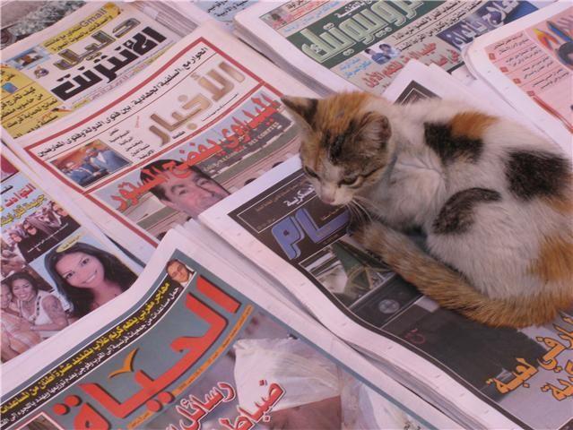 marrakshi cat worth remembering Pinterest Cat calendar and Cat