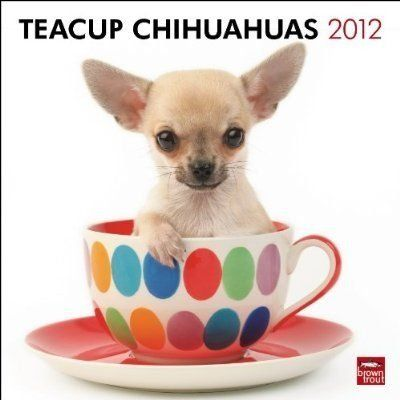 Tea Cup Size Chihuahua Cute Happy Birthday Chihuahua