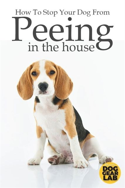 Dog Training Facility Dog Training 01880 Dog Training 48442