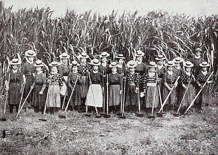 Japanese Sugarcane Farm Workers Hawaii Japanese american
