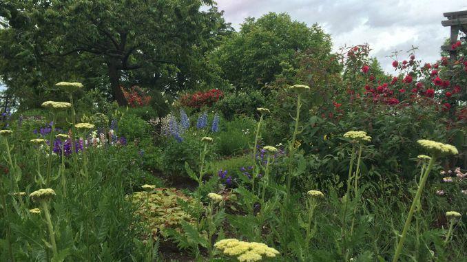 Bienengarten / Bee friendly garden