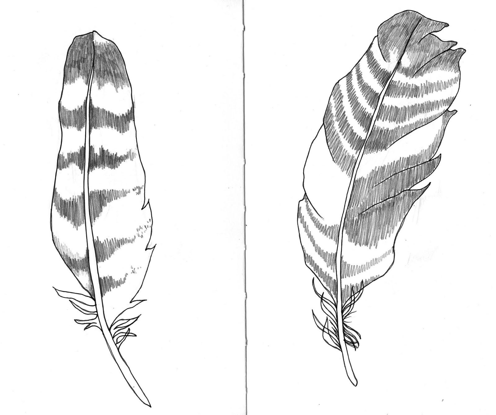 feather drawings sketch pinterest feathers drawings and artsy