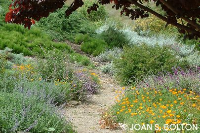 This Casual Garden Is Filled With Very Low Water California Native And  Mediterranean Plants,