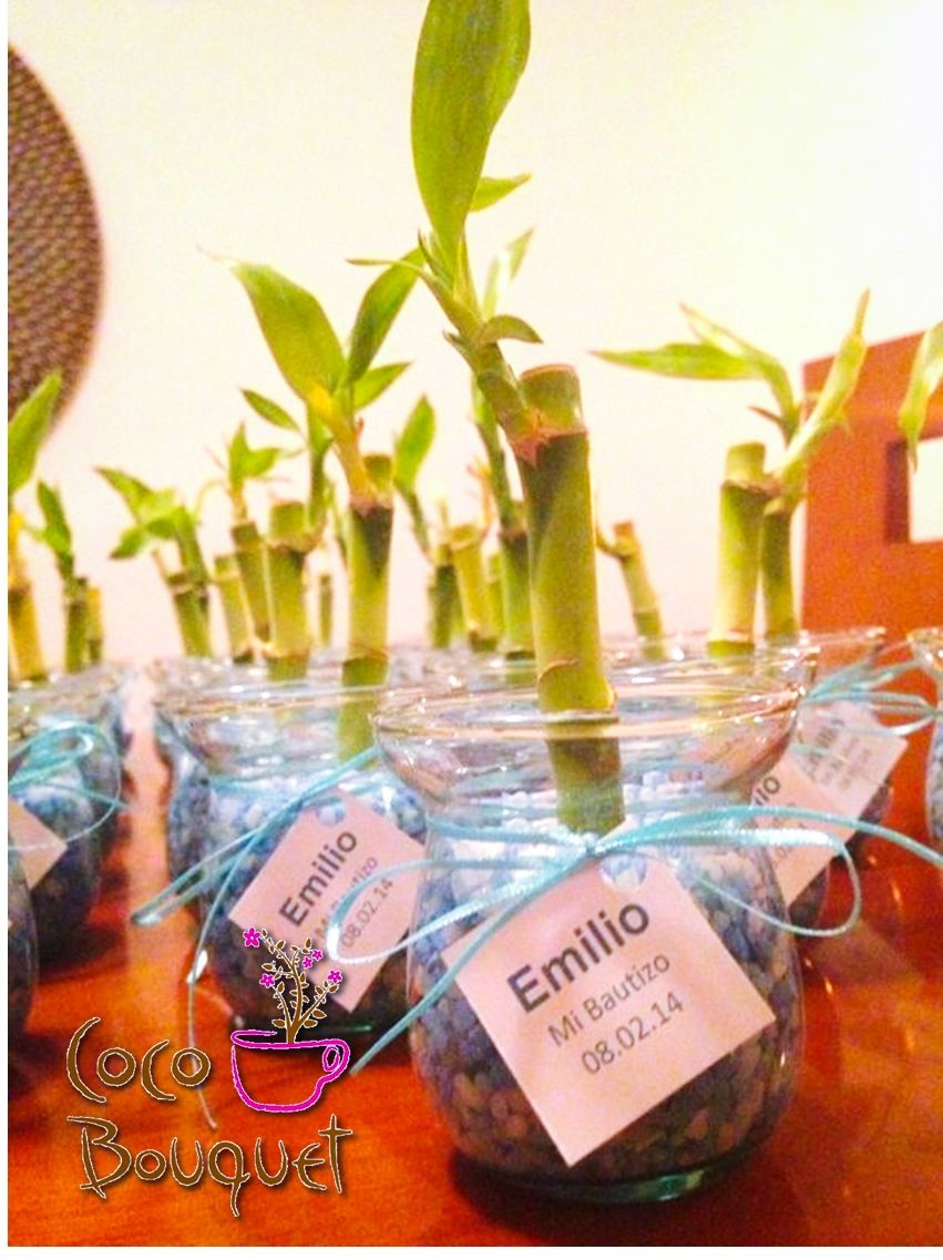 Lucky bamboos for a boy baptism coco bouquet 39 s favors - Boy baptism favors ideas ...