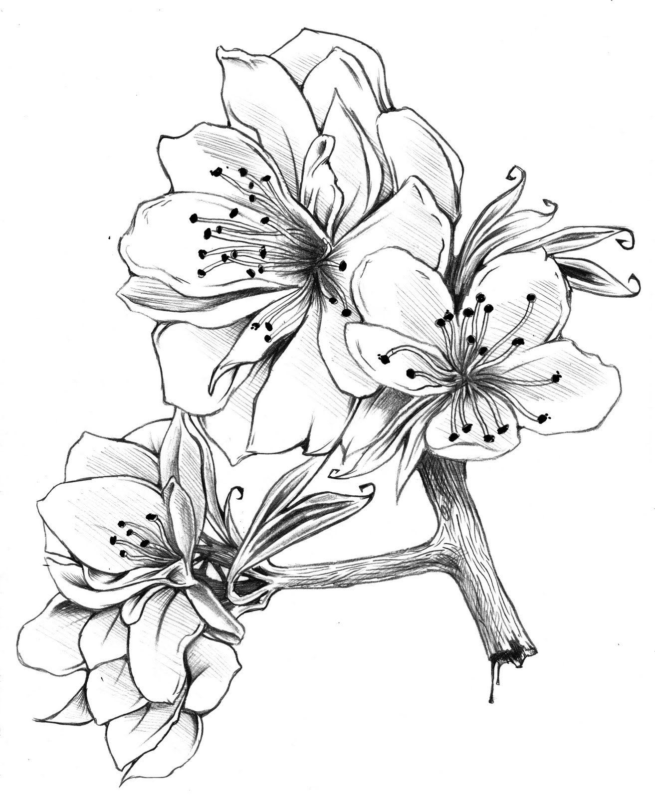 drawings of flowers - 736×896
