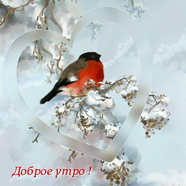 Гифки с птицами и надписями чудесного февральского дня
