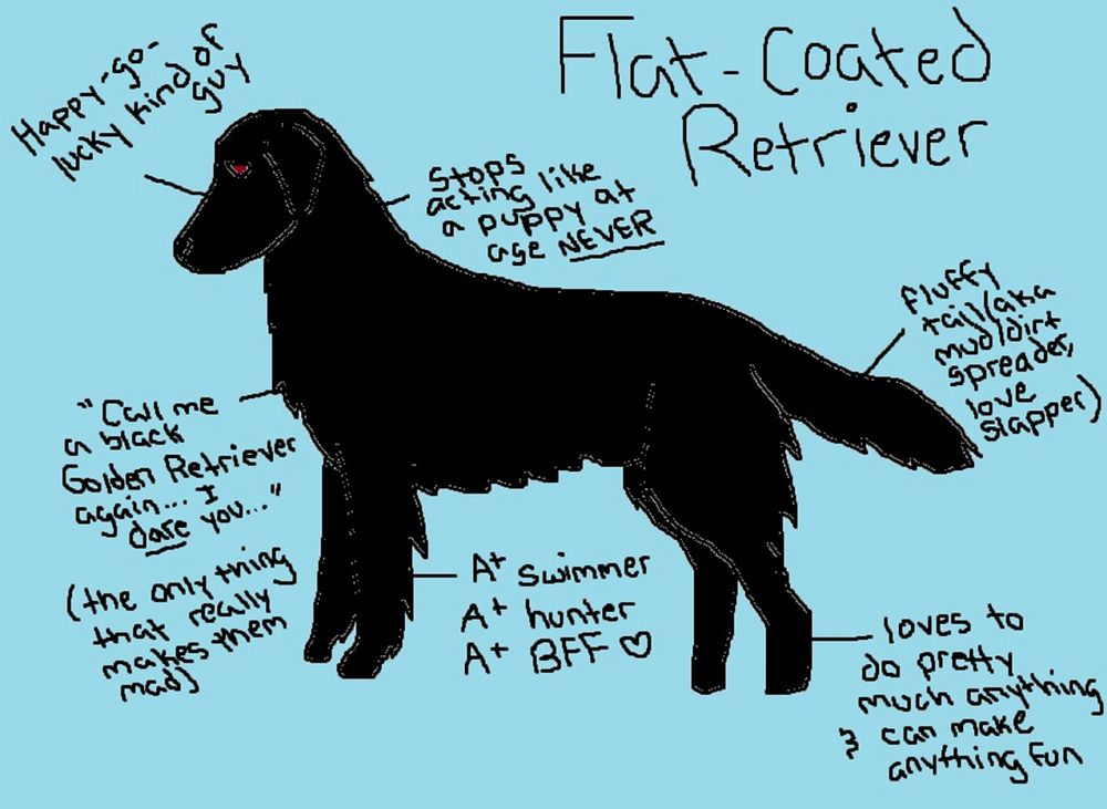 Flat Coated Retriever Couch Throw Pillow by Lindsay Beth ...