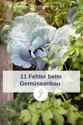 Gemüse richtig anbauen 11 Fehler, die Sie beim Anbau von Gemüse vermeiden sollten …   – uncategorized