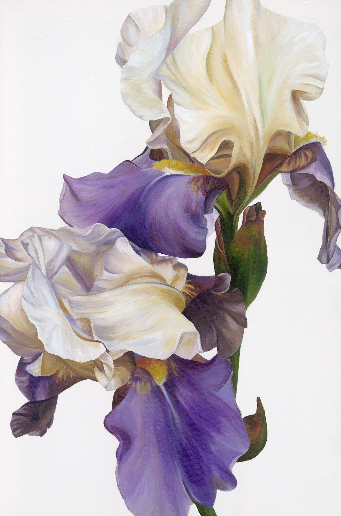 Freya powell sanguine print art pharmacy iris