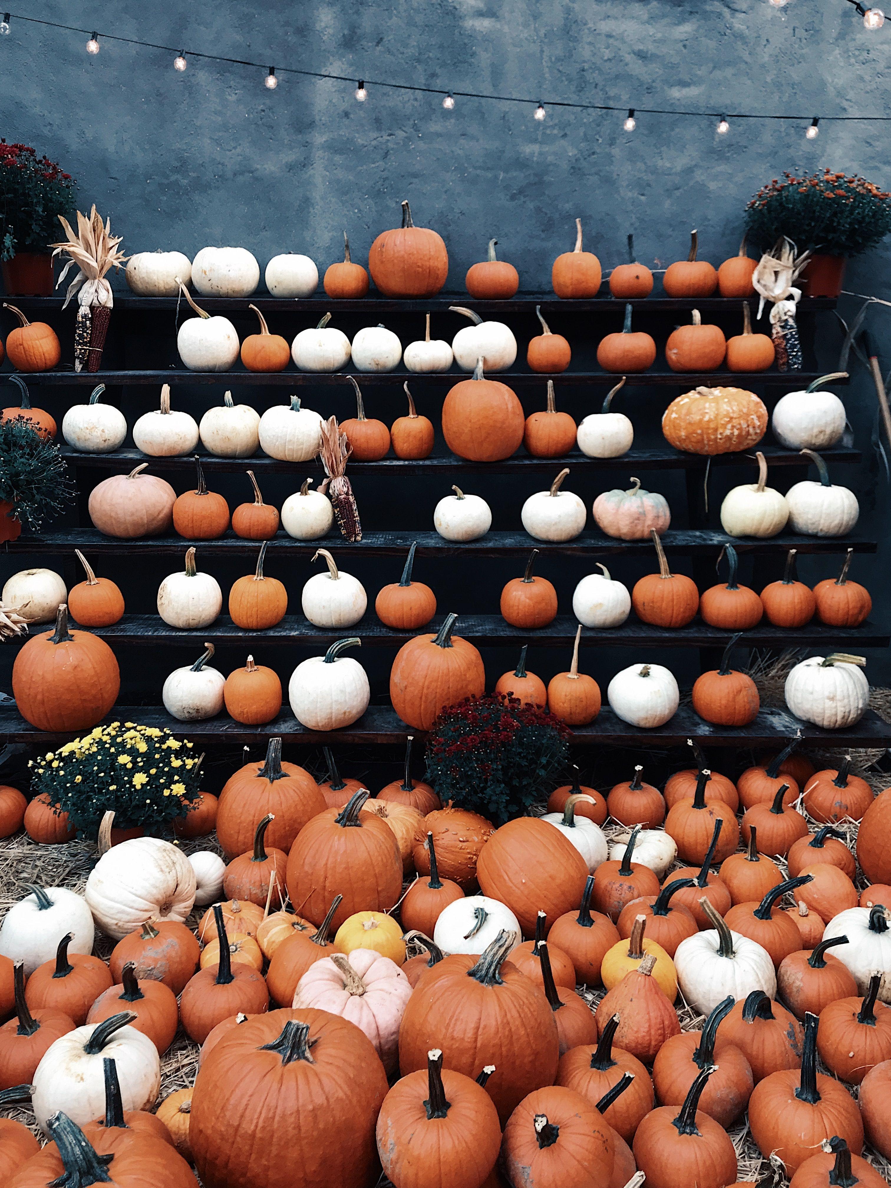 Halloween steht vor der Tür! Ihr seid immer noch auf der Suche nach cooler Deko, die nicht allzu kitschig oder völlig 0-8-15 ist? Dann haben wir 7 coole Halloween-Deko-Teile für euch aufgelistet. Viel Spaß damit und ein schaurig schönes Halloween!  #halloween #halloweendeko  Photo by Jon Tyson on Unsplash