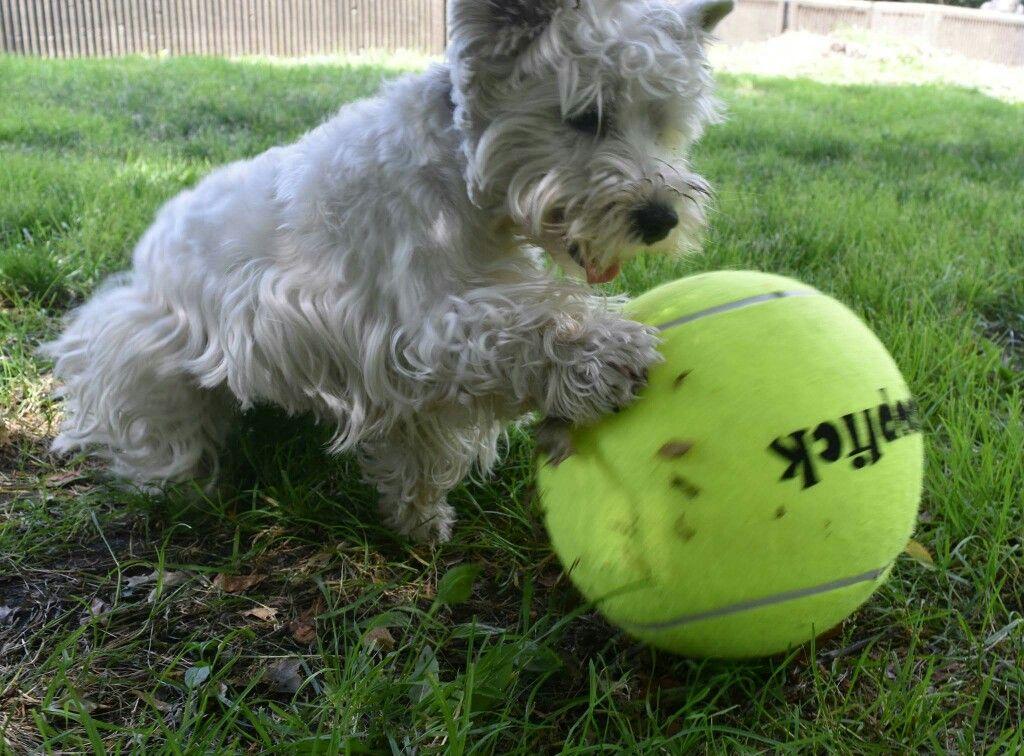 13.95!!! Big and bouncy Jumbo Tennis Ball. Tennis ball