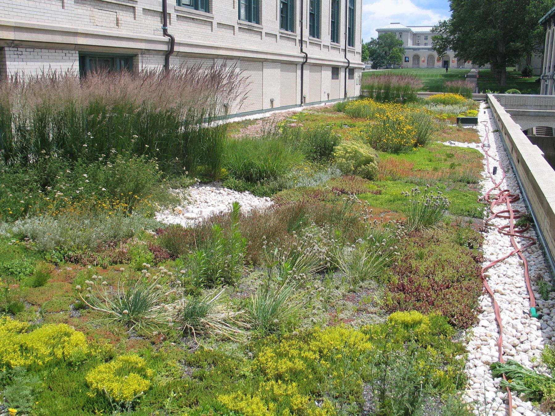 Image result for extensive green roof green roof for Tray garden designs