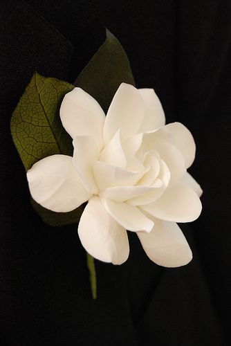 Gardenia Clay Flower Boutonniere Flower Drawing Gardenia Flowers