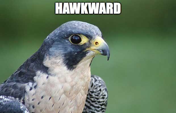 Pin By Zo Welch On Birds In Alabama Bird Puns Peregrine Falcon Peregrine