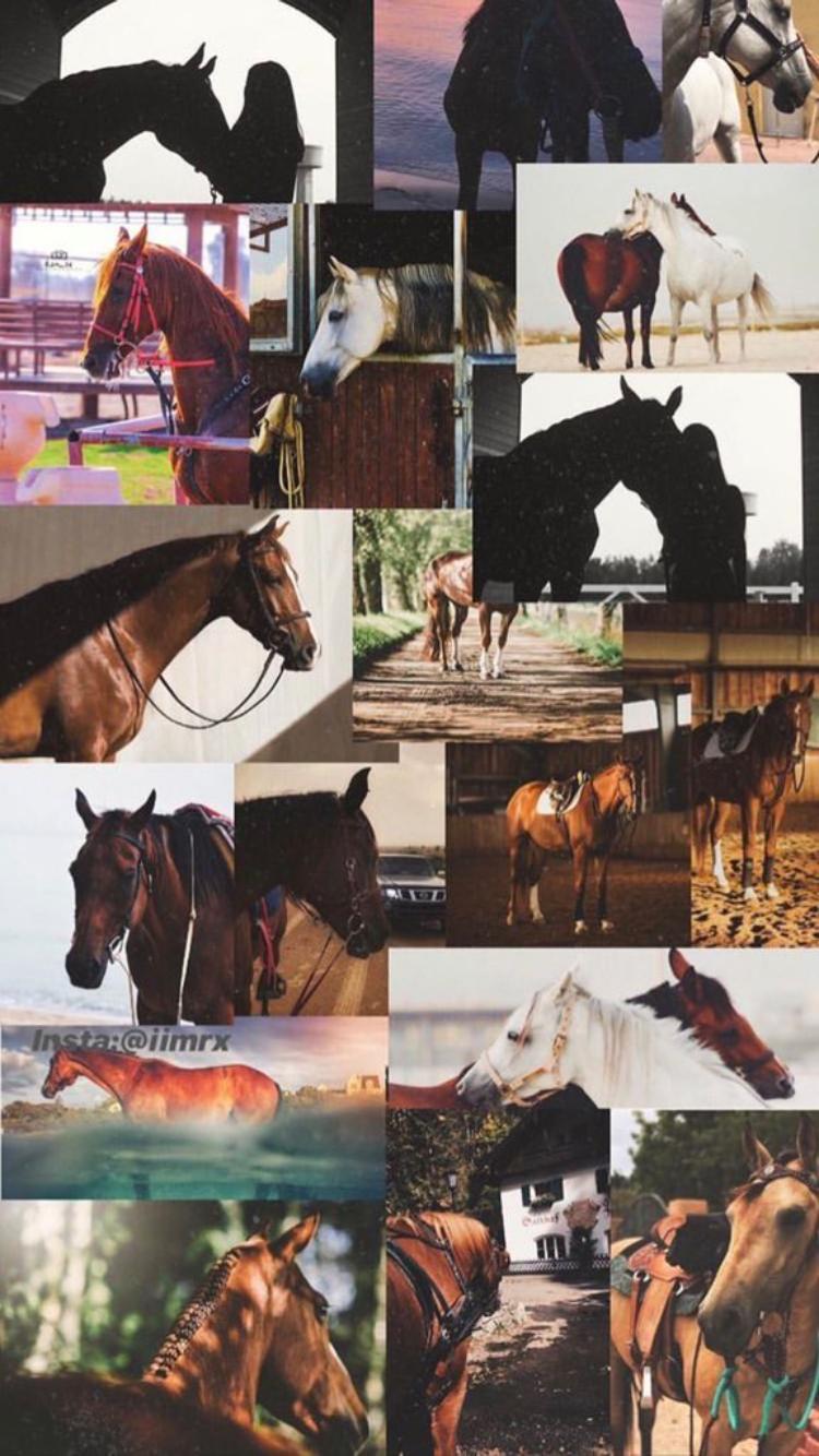 خلفيات خيل Horse Wallpaper Beautiful Photography Nature Iphone Wallpaper Quotes Love