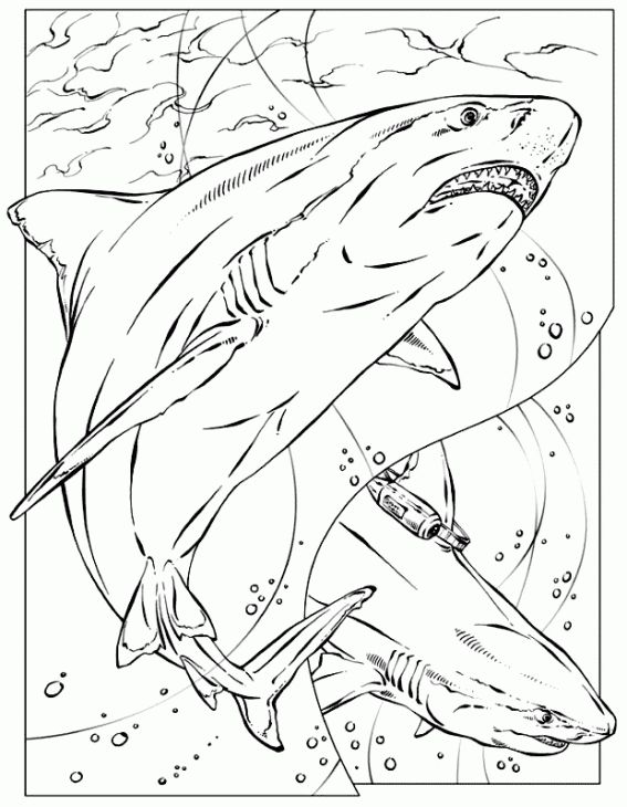 Realistic Coloring Page Of Shark For Adults Printable Animal