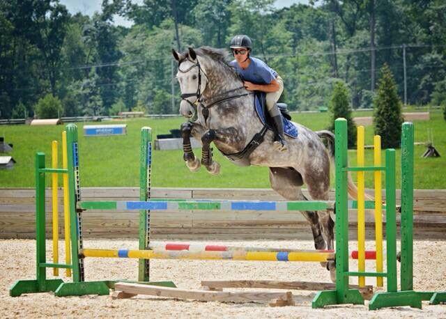 Dapple Grey Horse English Show Jumping Jump