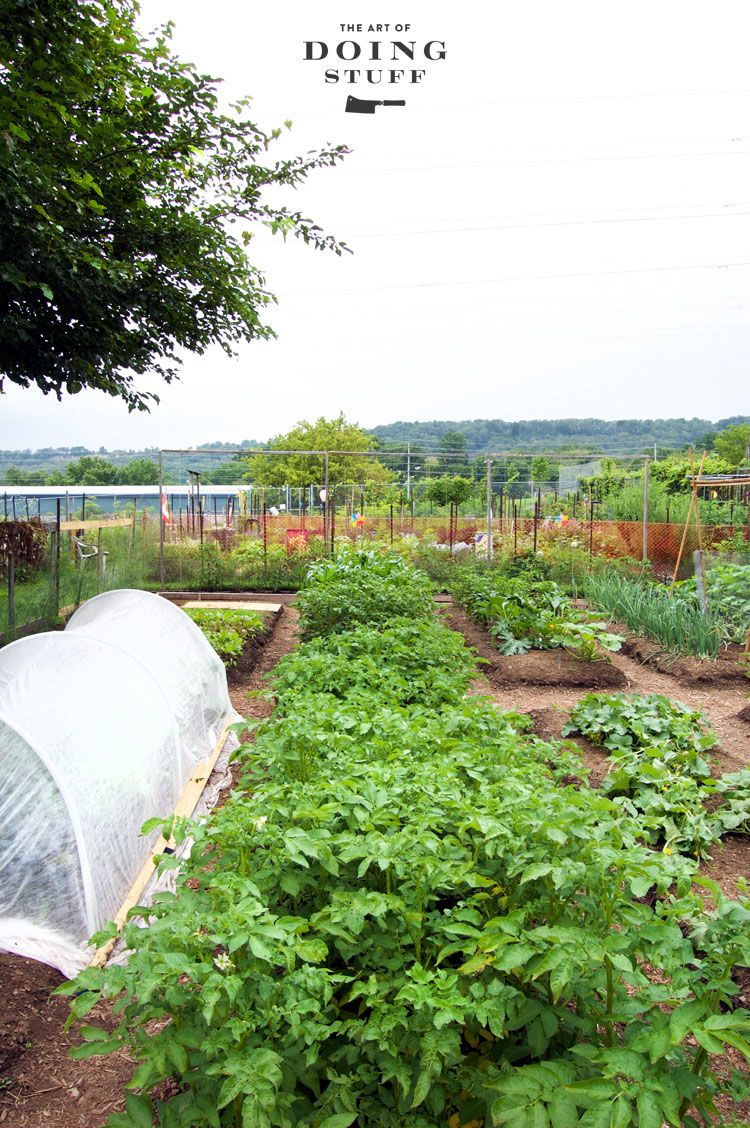 Vegetable garden design   simple gardening tips for creating a beautiful and productive