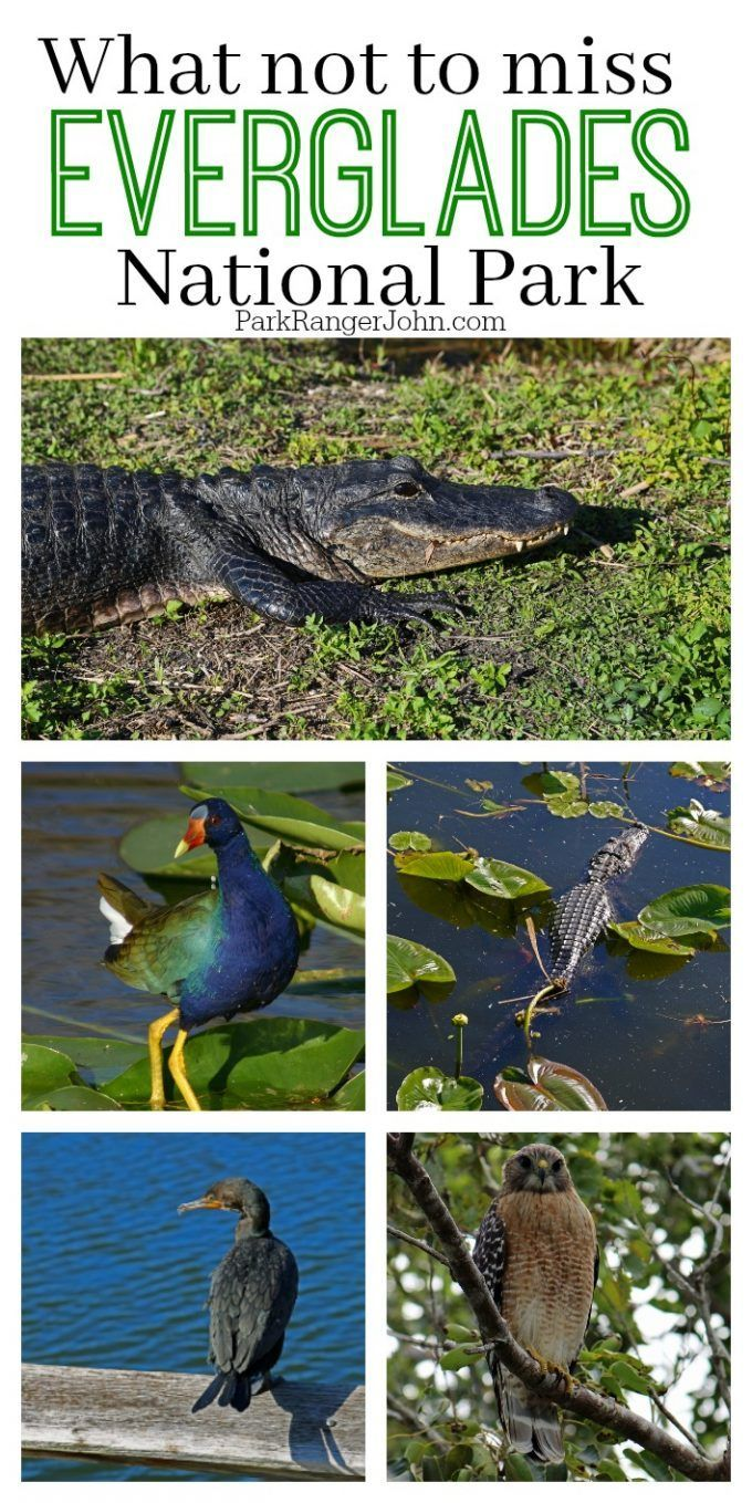 What not to miss during your Everglades National Park