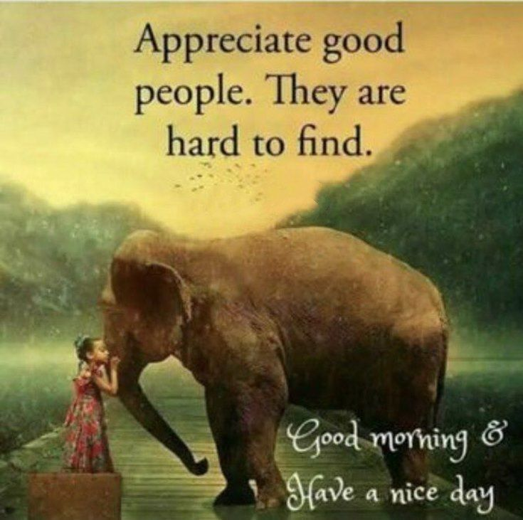 Appreciate Good People They Are Hard To Find Good Morning Have A Nice Day Good Morning Quotes Inspirational Quotes Pictures Morning Quotes
