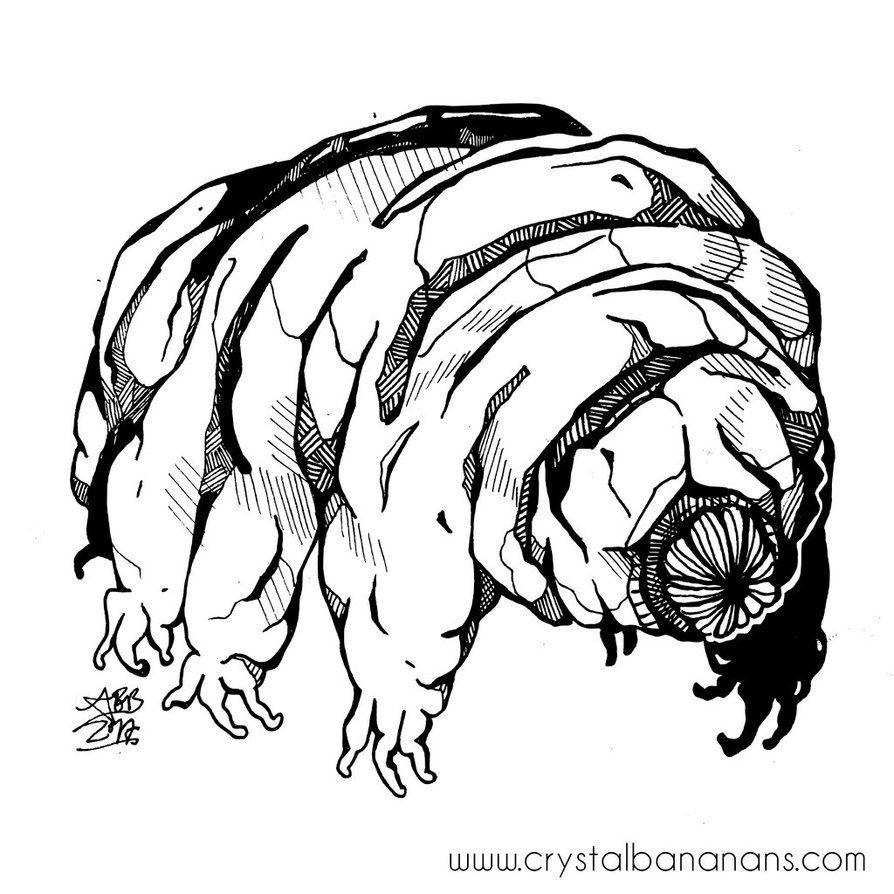 3.2.17: Water Bear (Tardigrade) by crystalbananas