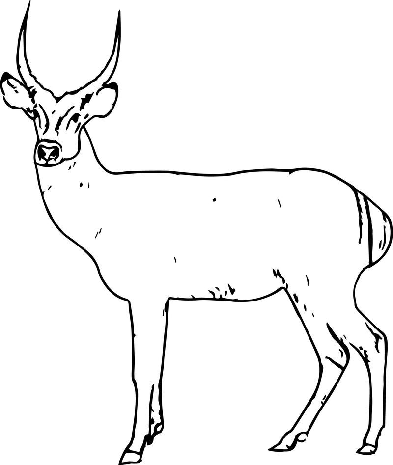 Antelope Spotted Deer Coloring Page Also See The Category To
