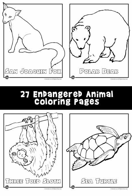 endangered animals coloring pages animals from north america the rainforest the ocean kids. Black Bedroom Furniture Sets. Home Design Ideas
