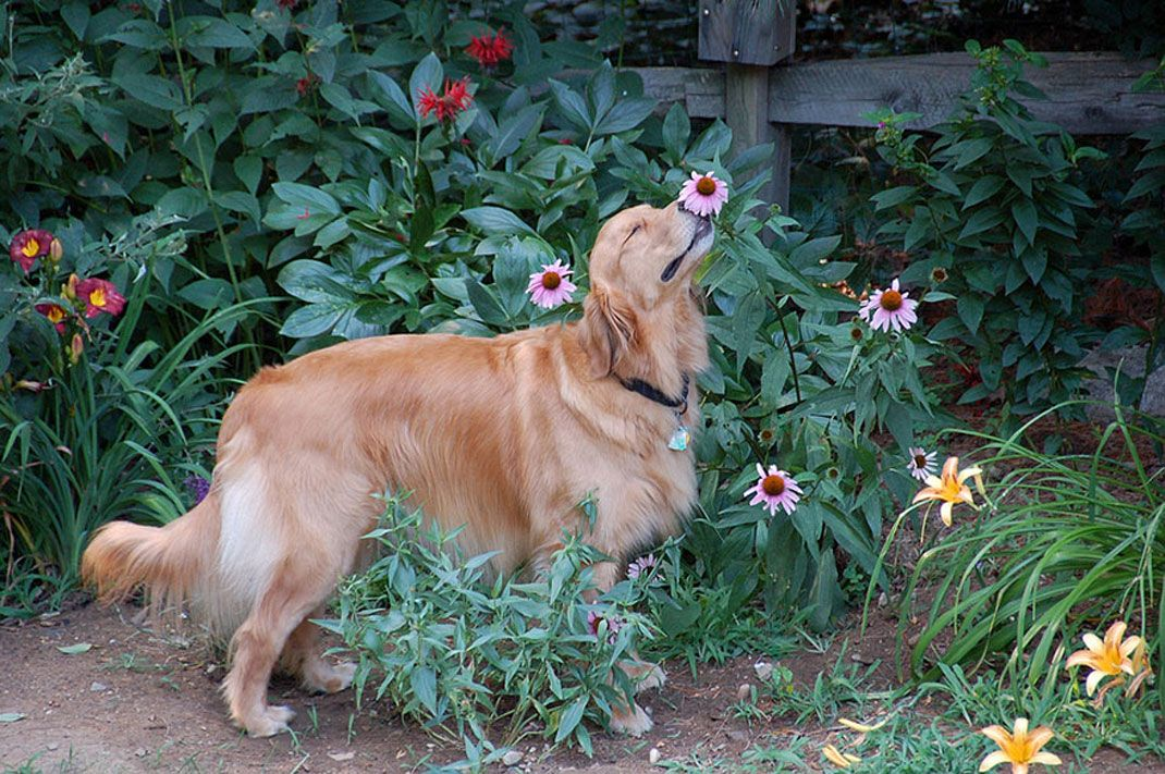 animals-smelling-flowers8
