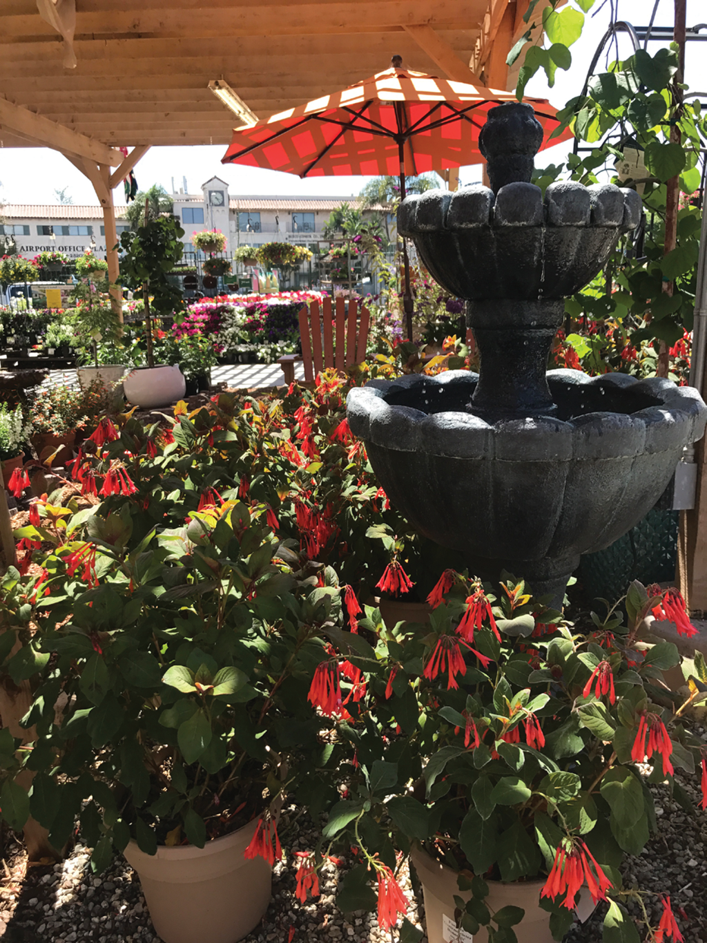 Independent garden centers stand out from other stores selling ...