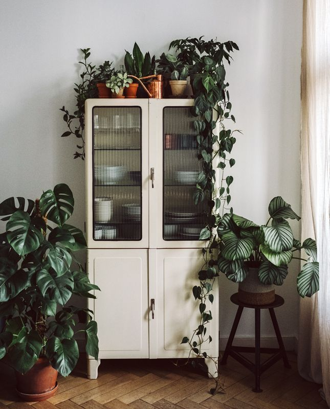Vintage kitchen cabinet and houseplants – ElisaZunder | Beauty, Inner Beauty, Achtsamkeit, Travel + Wellness