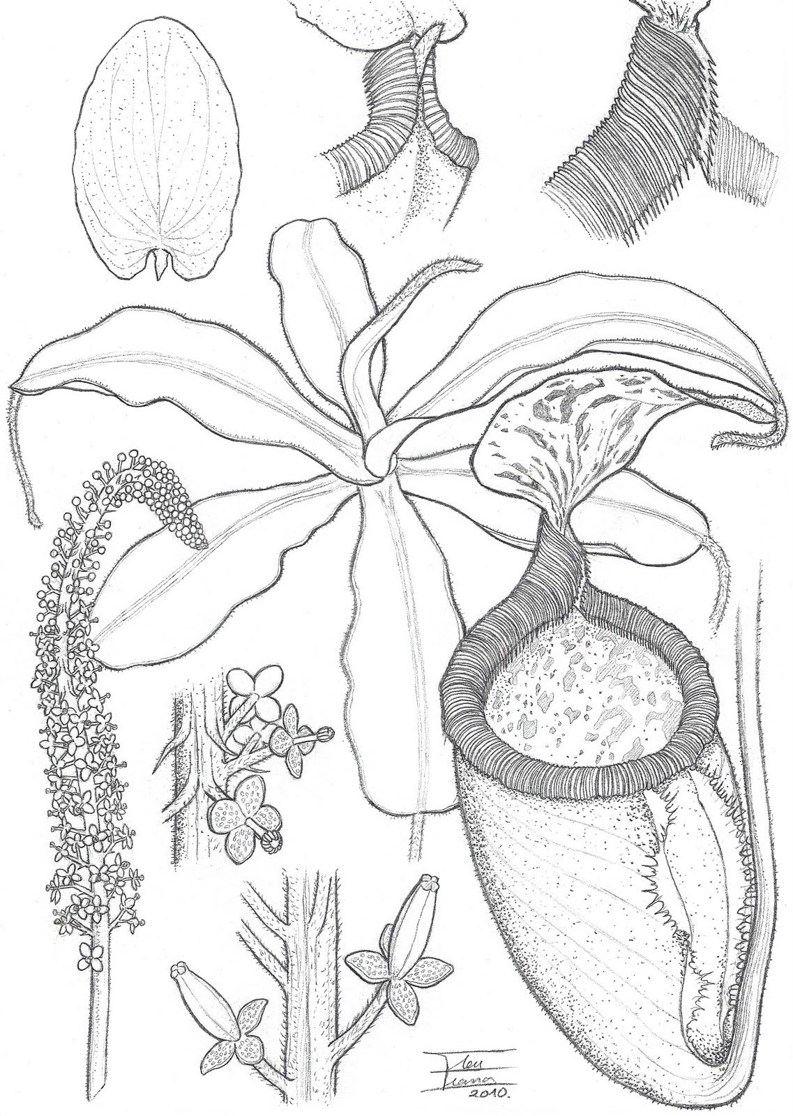 Carnivorous Plant Sketches Displaying 18 Gt Images For