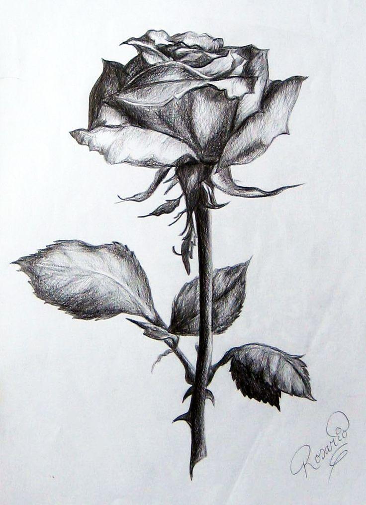 Rose Drawing Dibujos Bonitos de AMOR ∼ Dibujos Románticos para Pintar