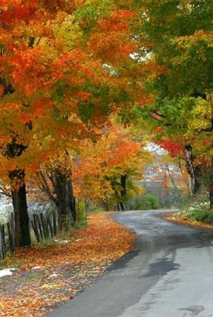 Colorful autumn leaves by ToriJoy