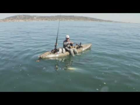 White Sea Bass Fishing From Hobie Mirage Revolution Salt Water Fishing Hobie Mirage Bass Fishing
