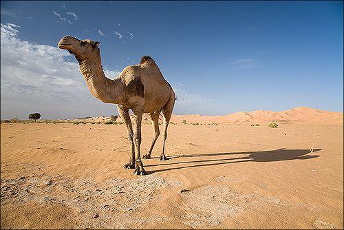 Libya / David Rombaut